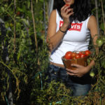 Eva Domínguez - Tomates II